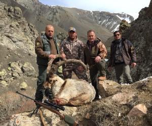 Erzincanlı avcılar boynuz uzunluğu 125 santimetreyi bulan dağ keçisi avladı