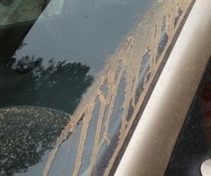 Çamur yağmuru şaşırttı