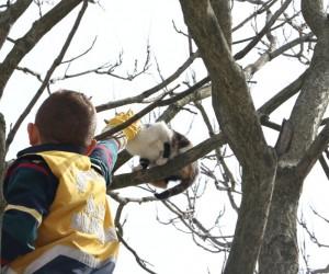Eyüpsultan'da ağaçta mahsur kalan kediyi, veteriner ekipleri kurtardı