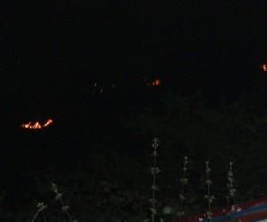 Giresun'da orman yangınları