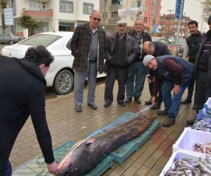 Amatör balıkçının ağına dev yayın balığı takıldı