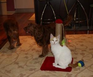 Kedi ve köpeklerin dostluğu görenleri şaşırtıyor