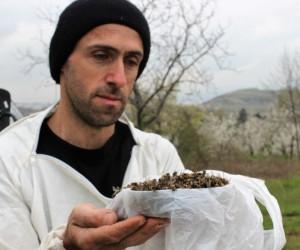 Çamur yağdı, milyonlarca arı öldü