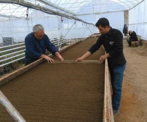 Simav Belediyesi serada mevsimlik çiçek üretimine başladı