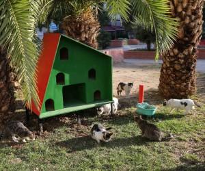Sokak hayvanlarına sıcak yuva
