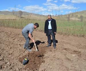 Adilcevaz'da örnek ceviz bahçesi kuruldu