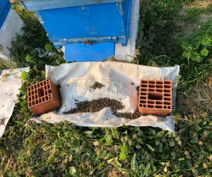 İnegöl'de arı ölümleri devam ediyor