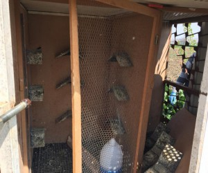 İnegöl'de binlerce liralık güvercinleri çaldılar