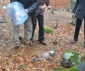 İnegöl'deki Hayvan Ölümlerine Flaş Rapor