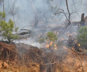 Orman yangınları için uyarı geldi