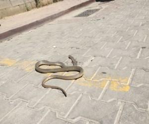 Çarşı içinde yılan paniği