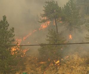 Orman yangını mezitlere ulaştı mı ?
