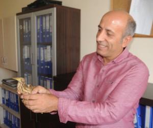 Cizre'de balaban kuşu bulundu