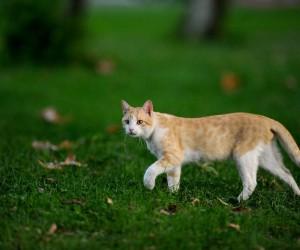 Kültürpark'ın rengarenk sokak kedileri