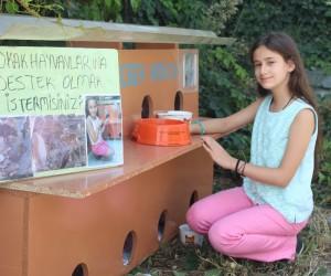 (Özel Haber) 11 yaşında sokaklarda keman çalarak kedi evi yaptırdı