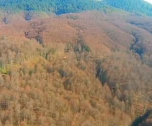 İnegöl ormanlarını kurtarmak için 100 bin TL'lik proje